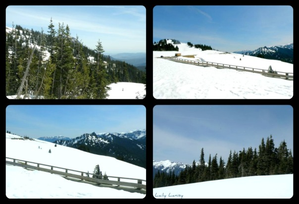 Hurricane Ridge collage