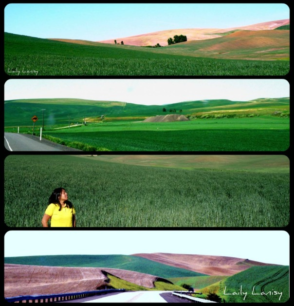 Palouse collage